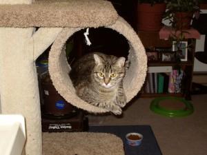 Kitty in Cat Tree Condo