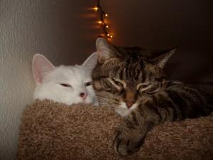 Kitty and Dotty on Cat Tree Condo