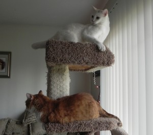 Two cats on the cat tree