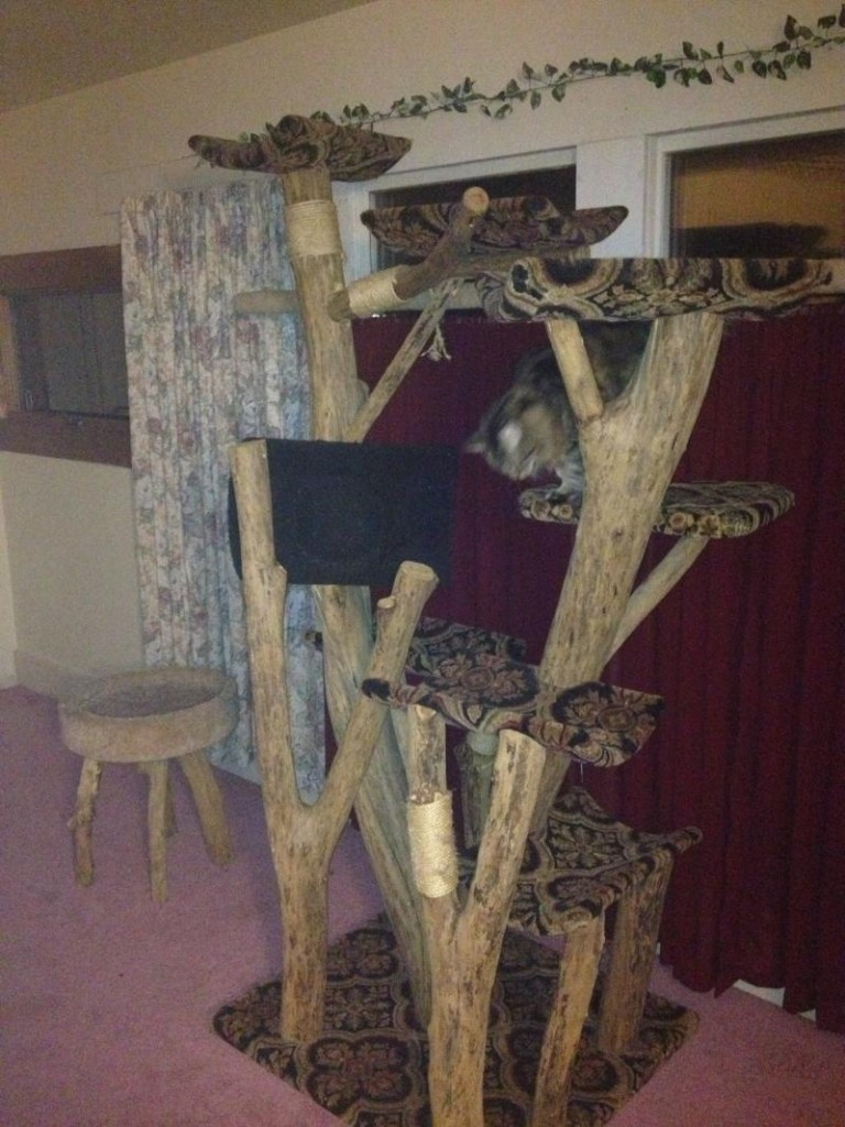 a creative approach to building cat trees the best cat trees